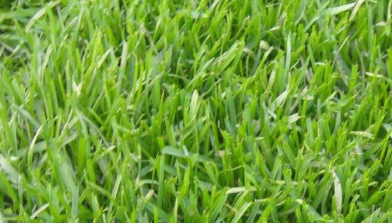 壁纸 草 成片种植 风景 绿色 植物 种植基地 桌面 560_318